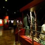 Musee Gourmand du chocolat_Histoire-4